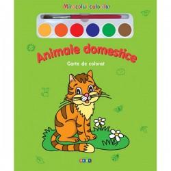 Animale domestice – Miracolul culorilor