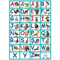 Alfabetul – plansa 700 x 500 mm